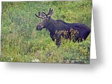 Mr Moose Greeting Card