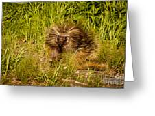 Mr. Porcupine Greeting Card by Chris Heitstuman