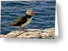 Mr. Puffin Greeting Card