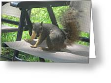 Mr. Squirrel Relaxing Greeting Card