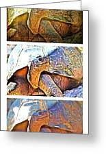 Mr. Tortoise Vertical Triptych Greeting Card