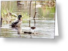Mr. Wood Duck And Friends Greeting Card