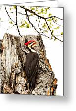 Mr.pileated Poses Greeting Card