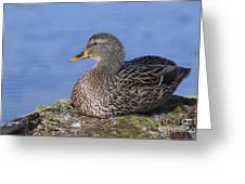 Mrs. Mallard Greeting Card