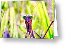 Mrs Mantis Greeting Card