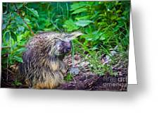 Mrs. Porcupine  Greeting Card by Chris Heitstuman