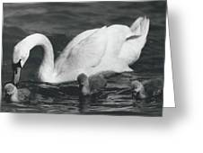 Mrs, Swan And Her Kids Enjoy Spring - Sun Greeting Card