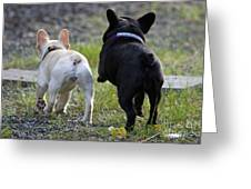 Ms. Quiggly And Buddy French Bulldogs Greeting Card