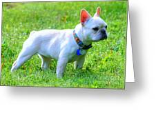 Ms. Quiggly - French Bulldog Greeting Card