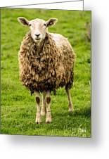 Mt Angel Abbey Sheep - Oregon Greeting Card
