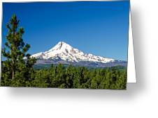 Mt. Hood And Pine Trees Greeting Card