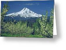 1m5125-mt. Hood In Spring Greeting Card