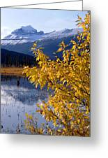 1m3626-mt. Saskatchewan In Fall Greeting Card