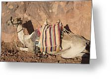 Mt. Sinai's Camel Greeting Card