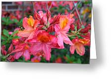 Mt St Helens Azalea Greeting Card