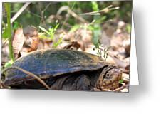 Mud Turtle Greeting Card