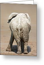 Muddy Elephant With Funny Stance  Greeting Card