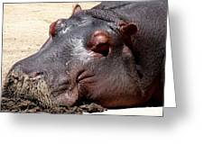 Muddy-faced Hippo Greeting Card