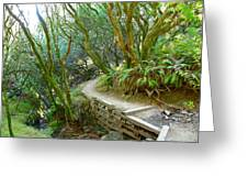 Curve In The Dipsea Greeting Card