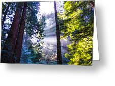 Muir Woods - Fog And Light Greeting Card