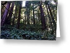 Muir Woods Greeting Card