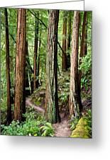 Muir Woods Greeting Card by Niels Nielsen