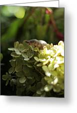 Muis In Hortensia Greeting Card