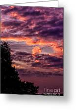 Mulberry Morning Greeting Card