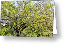 Mulberry Tree Greeting Card
