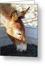 Mule A Cool Drink Greeting Card