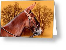 Mule Days - Westmoreland Tn  9-28-13 Greeting Card