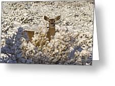Mule Deer   #0061 Greeting Card