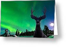 Mule Deer And Aurora Borealis Over Taiga Forest Greeting Card