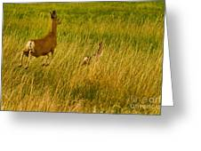 Mule Deer Doe And Fawn-signed-#0365 Greeting Card