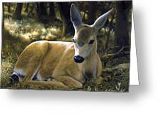 Mule Deer Fawn - A Quiet Place Greeting Card by Crista Forest