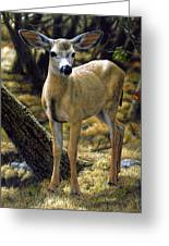 Mule Deer Fawn - Monarch Moment Greeting Card