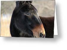 Mule Portrait 2 Greeting Card