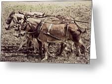 Mule Team Greeting Card