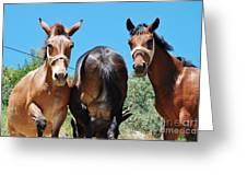 Mules On Alonissos Island Greeting Card