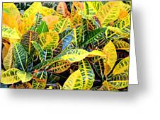 Multi-colored Croton Greeting Card