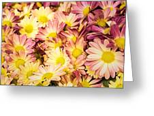 Multi-colored Daisies Greeting Card