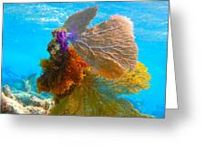Multi Colored  Ferns Greeting Card
