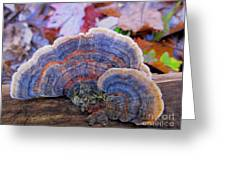 Multicolor Mushroom Greeting Card