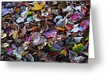 Multicolored Autumn Leaves Greeting Card