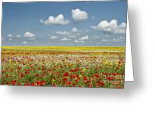 Multicoloured Field Greeting Card