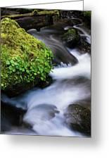 Munson Creek Flows Through The Forest Greeting Card