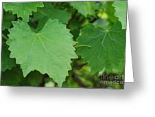 Muscadine Leaves Greeting Card