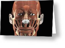 Muscles Of The Face Greeting Card