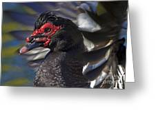 Muscovy Be-bop Greeting Card