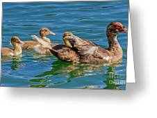 Muscovy Family Greeting Card